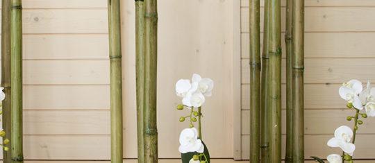bambou decoratif
